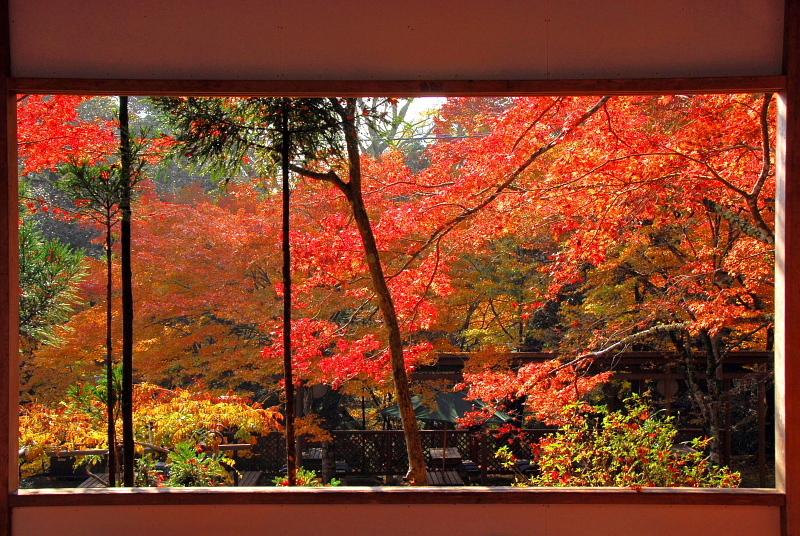 京都に遊ぶ