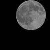 今宵の月参