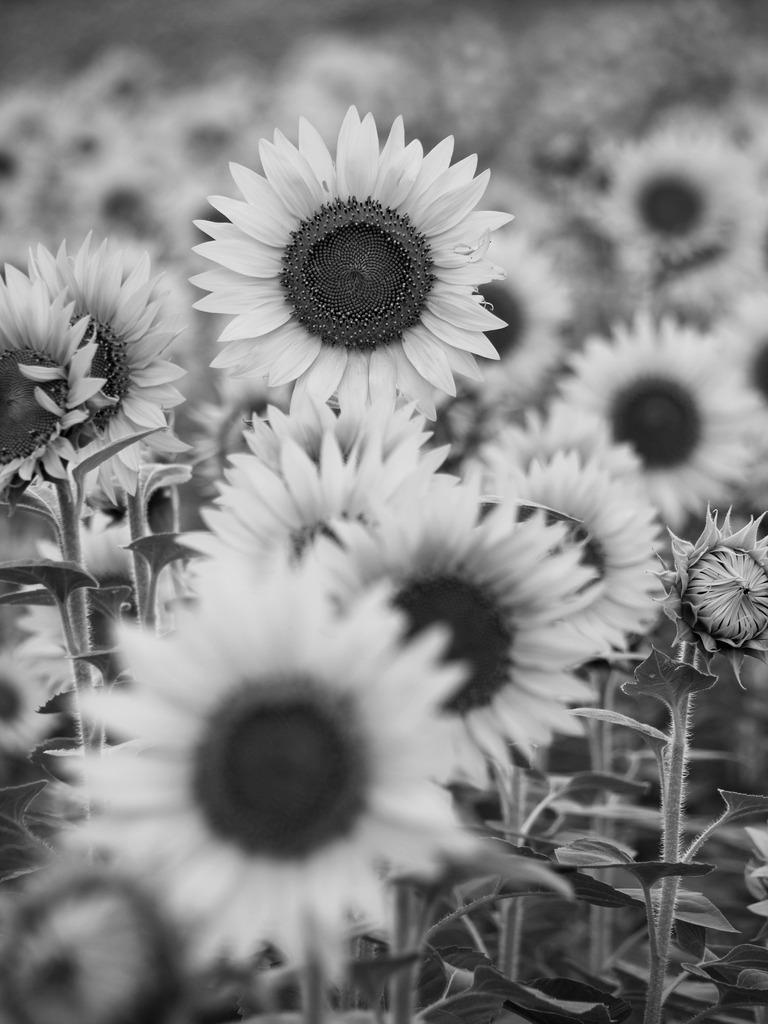 ある夏の日