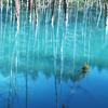 空の青・池の青
