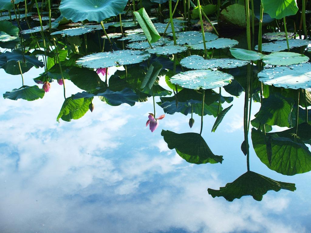 花と水と空と