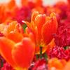 燃盛る花束