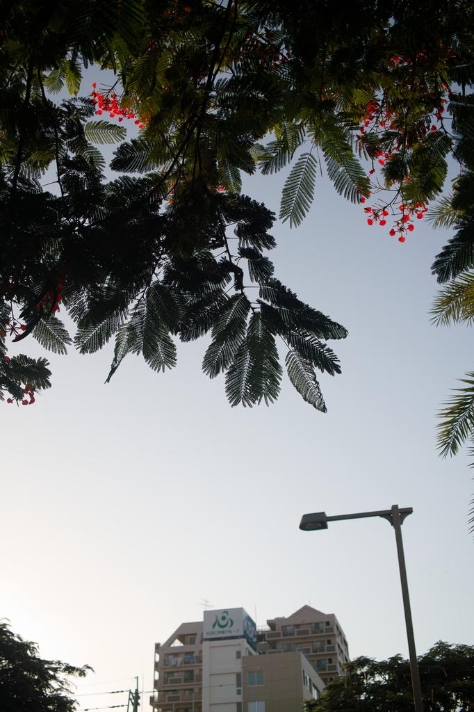 植物と建物