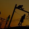 電線の上の少女たち