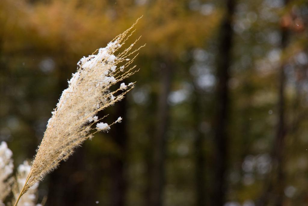 箒にかかる白いホコリ