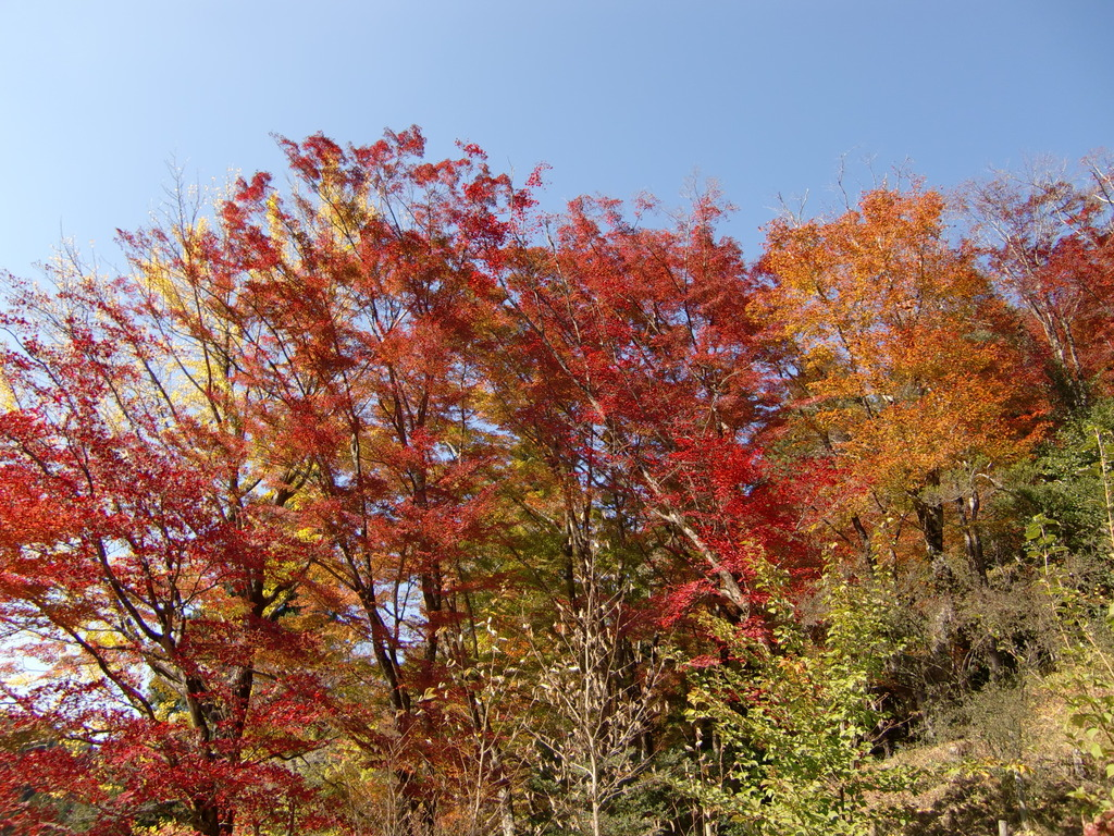 大井平公園