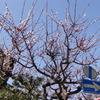 2010_0305_123816-CIMG0801