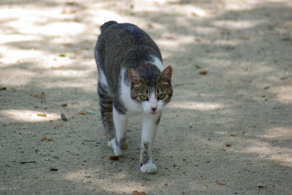 猫と睨み合い