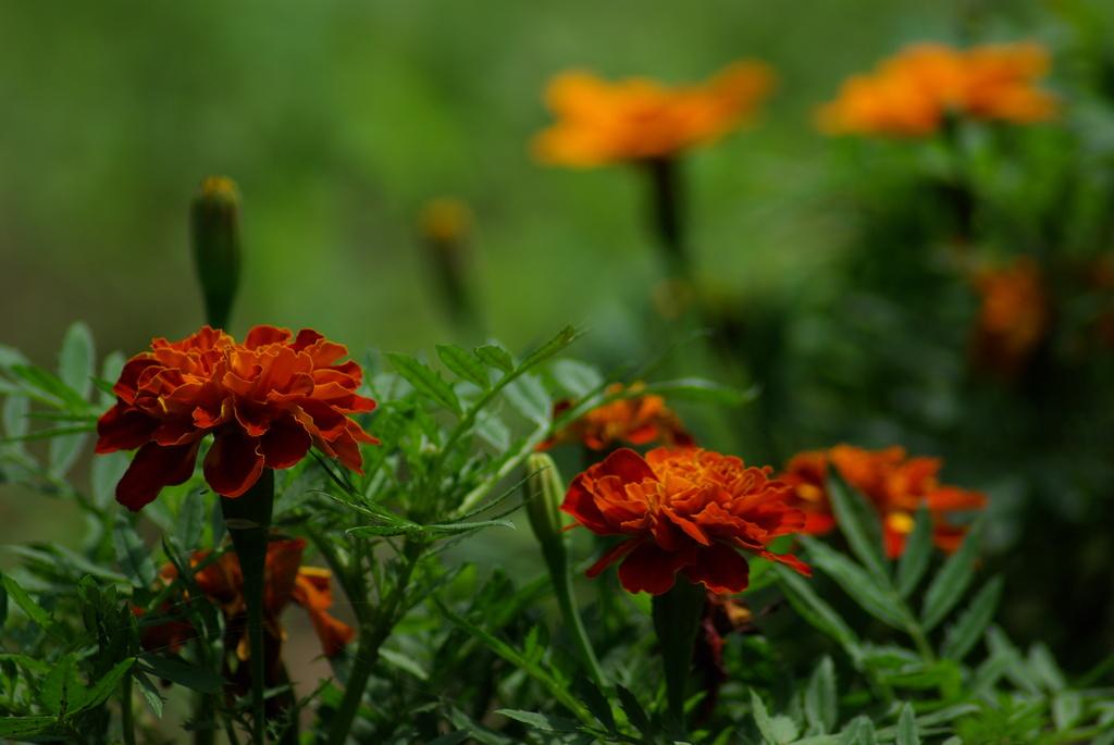 近くの森の花