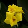 近所の花2