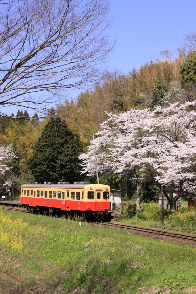 出張で小湊鉄道1