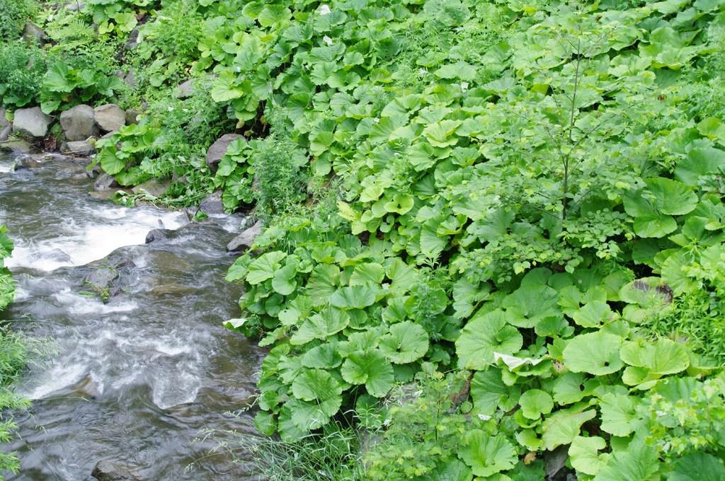 川に迫る緑