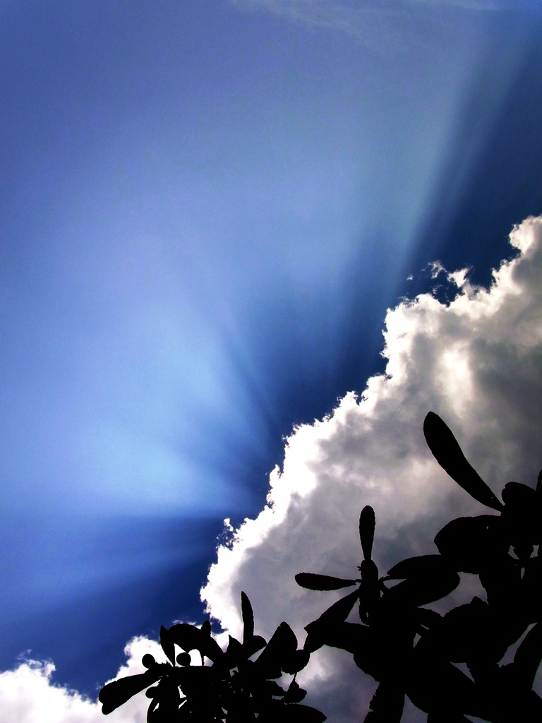 光と雲と枇杷