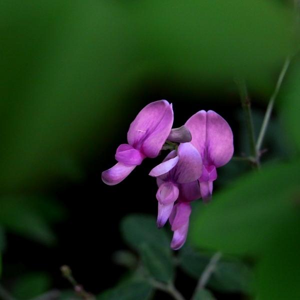 濃い紫の花