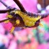 秋色の毛虫くん