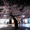 桜の樹の下には・・・・
