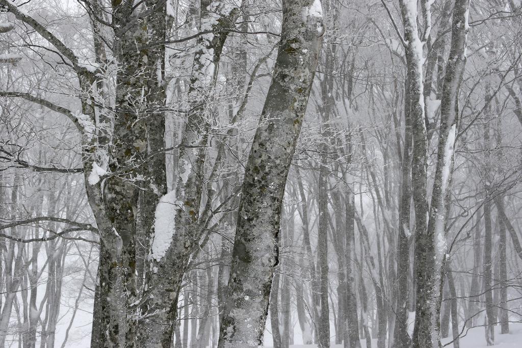 冬-八甲田01