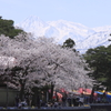 妙高山残雪と桜並木