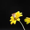 花&てふてふ