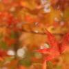 秋、深まり
