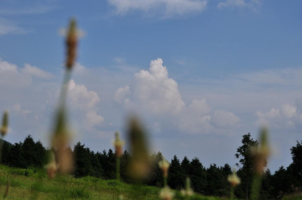 待望の入道雲
