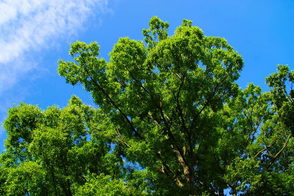 この木なんだろう~?