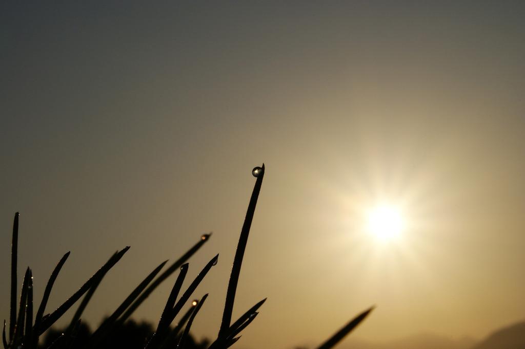 朝の光をあびて