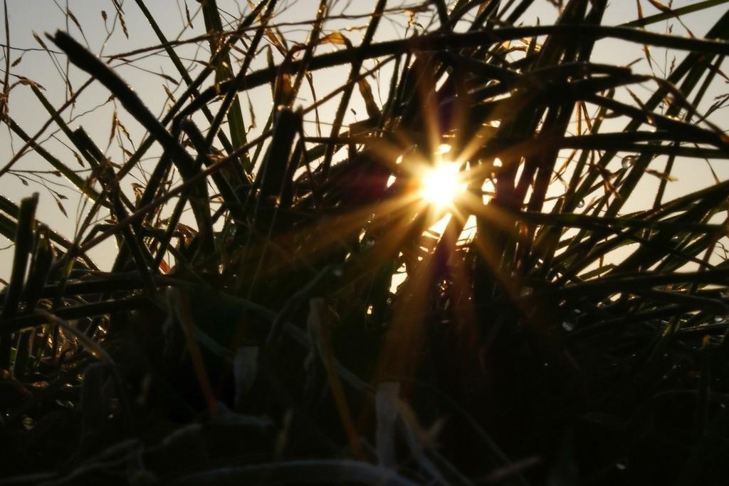 草むらの朝