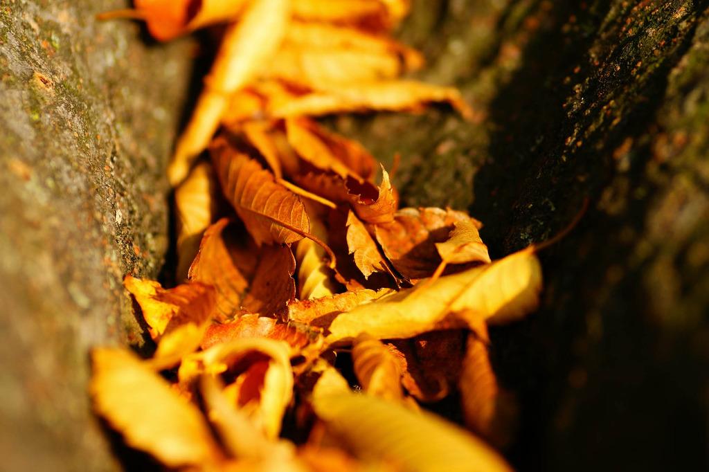 落ち葉の沢