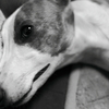 愛犬つばめの憂鬱