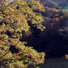 妙義湖の秋