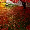 そうだ秋の京都へ行こう!