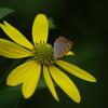 花と蝶_2