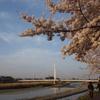 ふれあい黄桜1