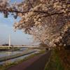 ふれあい黄桜2