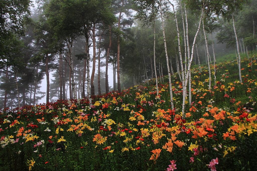 朝霧の演出で瞑想的な景色