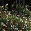 カラフルな魔法の絨毯・・・