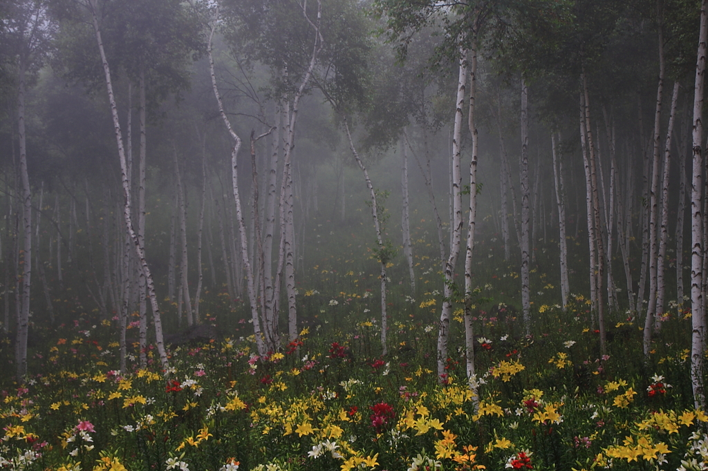 辺り一面に広がった朝霧