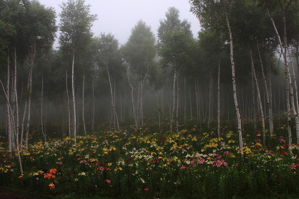 霧の演出でさらに雰囲気アップ・・・