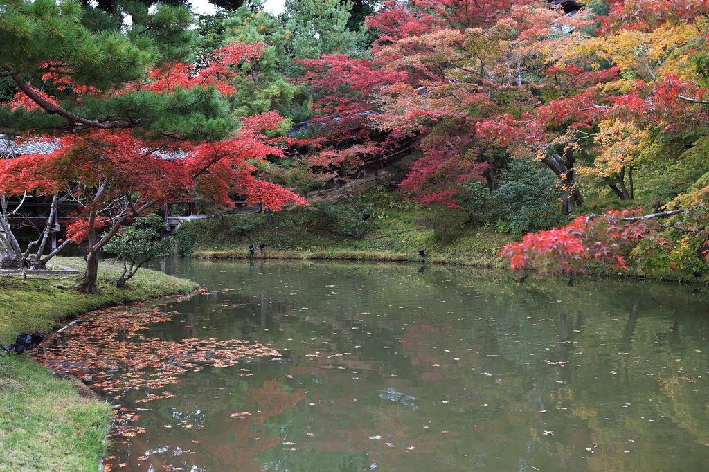 紅葉と池への写り込み・・・