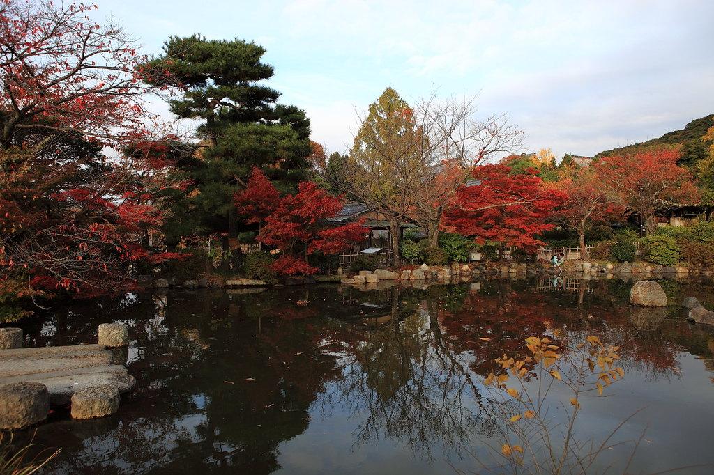 京都円山公園の池と紅葉・・・