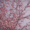 桜のキヲク_02