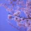 桜色と空色