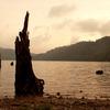 湖に佇む枯木と夕陽