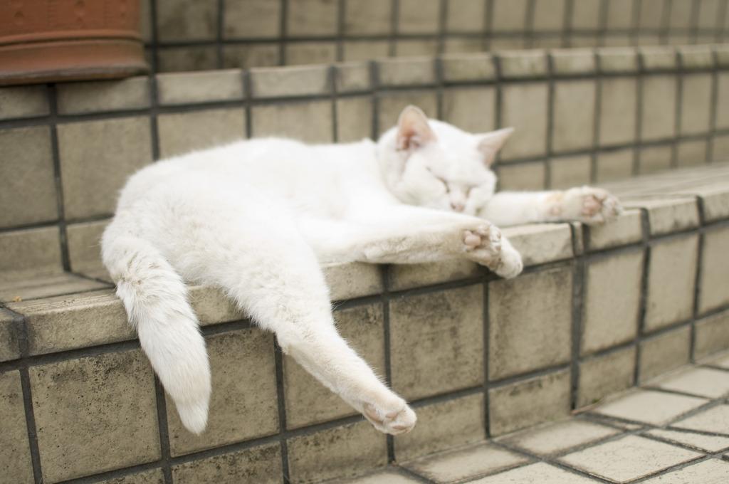 ねむそうなネコ