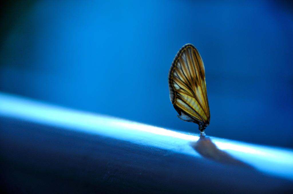 羽の落し物