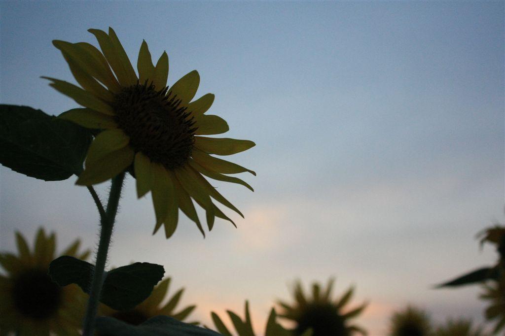 夏のおわりⅡ