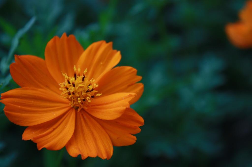 夕暮れ時の花