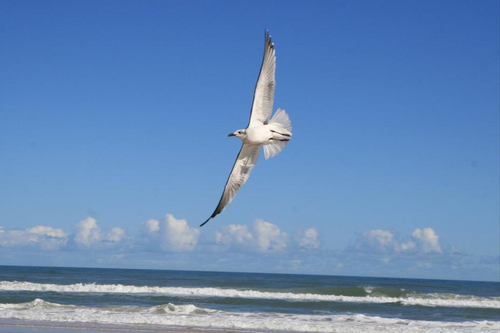 フロリダ デイトナビーチ カモメ