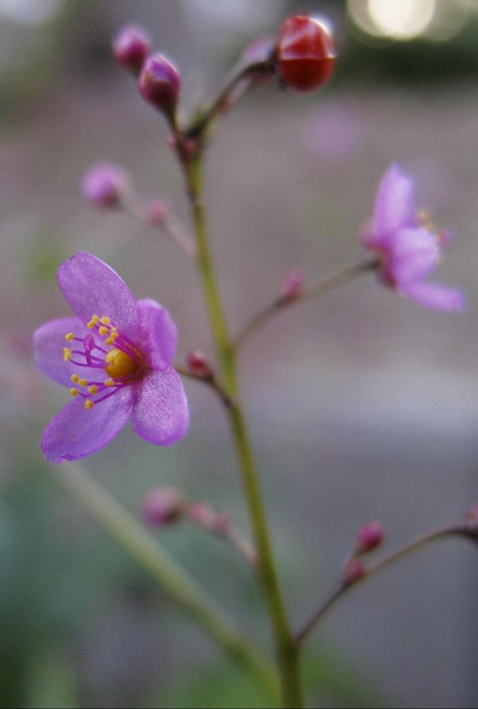 5mm位の花なんですが・・・3